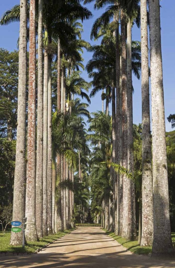 Palm trees in botanical garden, Rio de Janeiro