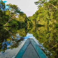 Boat cruising the Amazon River in the Rainforest