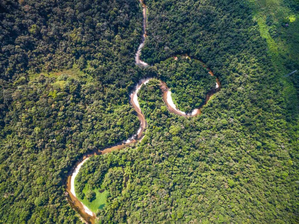 Amazon Rainforest seen from above