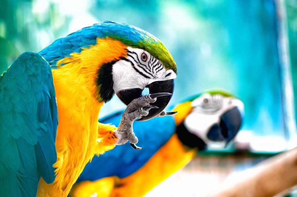 Blue and yellow macaw is one of the prettiest Amazon Rainforest birds