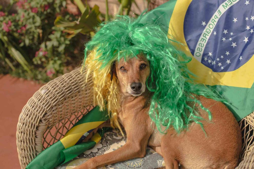 Brazilian dog wearing green wig near country's flag
