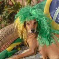 Brazilian dog wearing green wig near country's flag