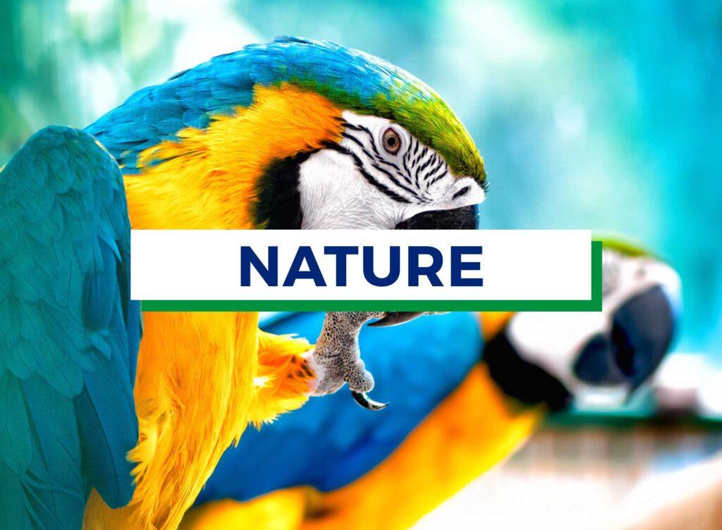 Nature home thumbnail