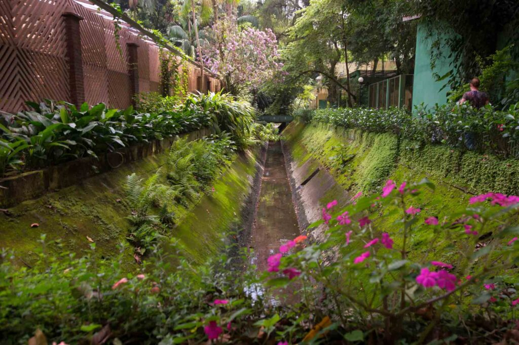 Exploring the Municipal Orchid Farm is one of the best things to do in Santos, Brazil